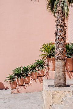 Palmen in Marokko  | Marokkaanse reisfotografie van Yaira Bernabela