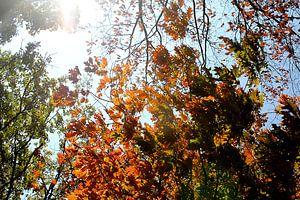 Oranje tegen groen van Samira Uddin