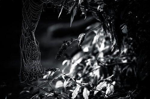 Spinnenweb in zwart / wit