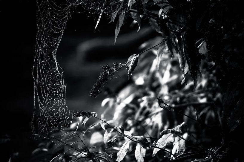 Spinnenweb in zwart / wit van Michiel ter Elst
