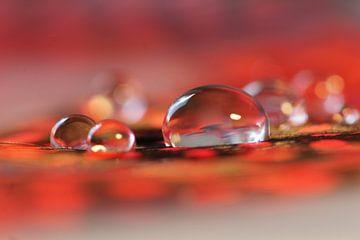 Red sparkling van Carla Mesken-Dijkhoff