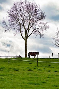 Weide met paard en boom van Wesley Hendriks