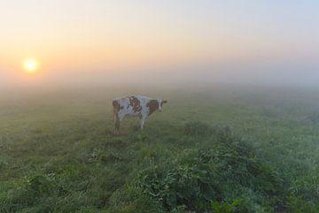 Koe in mistige polder von Remco Van Daalen