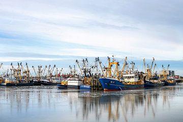 Vissersboten in de haven van Lauwersoog