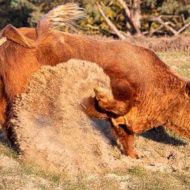 Wilder Stier 2 von Jaap Tempelman