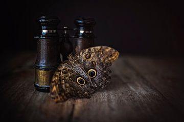 Nachtvlinder van Josette Alkema