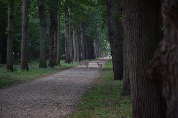 overstekende hertjes in het bos
