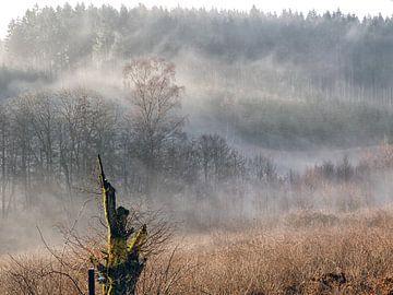 Mist in de  Ardennen van Wilfred Roelofs