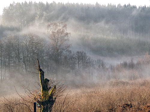 Mist in de  Ardennen van