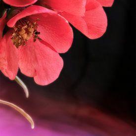 Drei Blüten von Max Steinwald