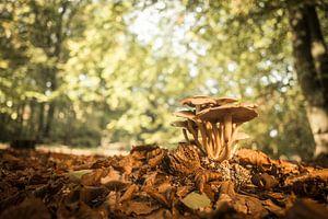 Paddestoelen in het bos tijdens een mooie herfstdag