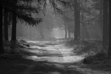 Natuur zicht von Richard Boon