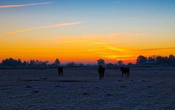 Zonsopgang met paarden  van Paula Darwinkel