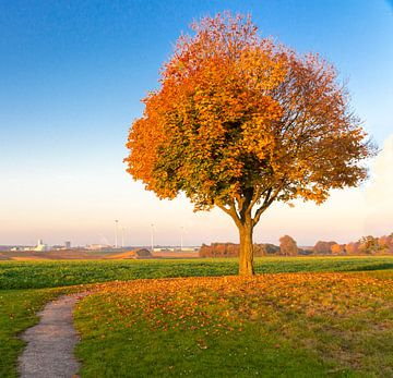 Herbstfarben von Jack van der Spoel