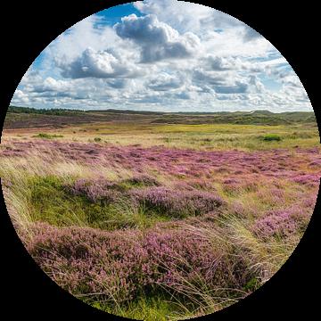 Heide in duin panorama van Fotografie Egmond