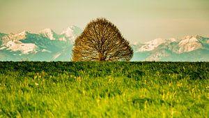 Baum vor Bergen von