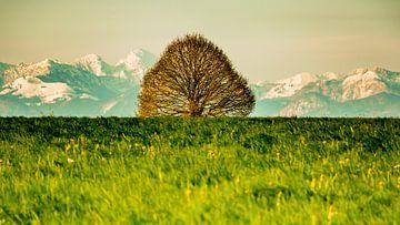 Tree in front of mountains van