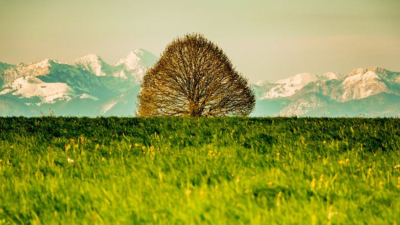 Tree in front of mountains van Holger Debek