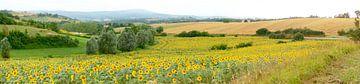 Sonnenblumenfelder Südfrankreich von Corinne Welp