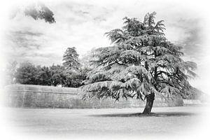 Nature: Big Tree van