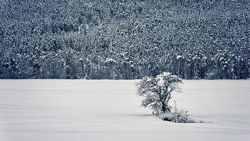 Beginn des Winters von Manjik Pictures