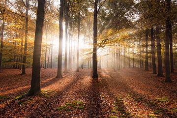 Herbst im Wald von Claire Droppert