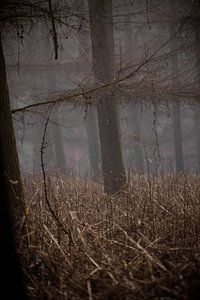 The woods VI