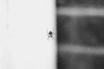 Spin in web van Geertruida van der Ploeg