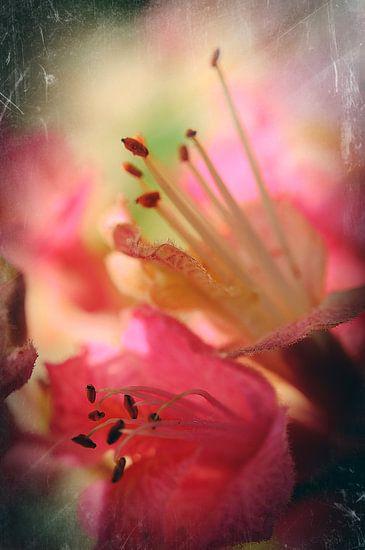 Beauté fragile