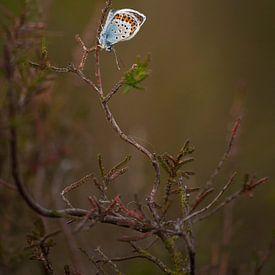 Heideblauwtje van Margreet Frowijn