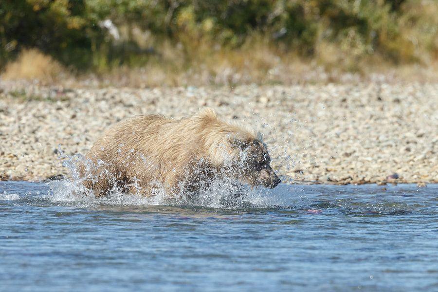 Een grizzly beer van Menno Schaefer