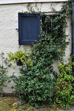 Witte muur met blauw luik en groene planten van Maud De Vries