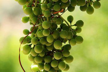 Druiven trosje
