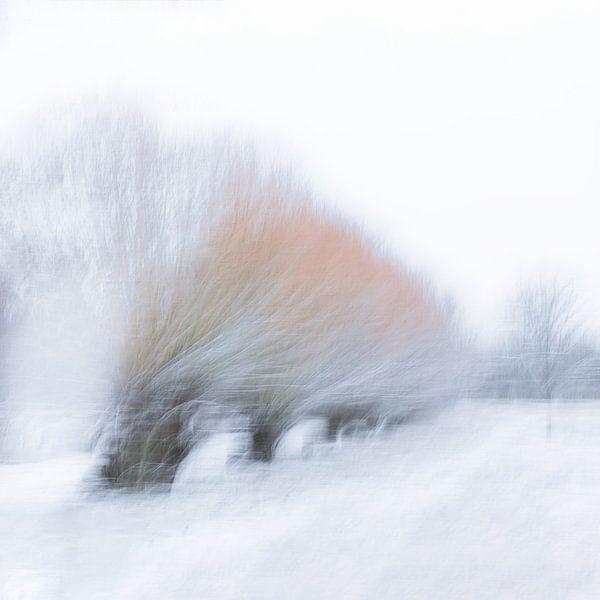Winterse knotwilgen (bomen) van Vandain Fotografie