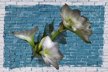 Blumen an der blauen Wand von didier de borle