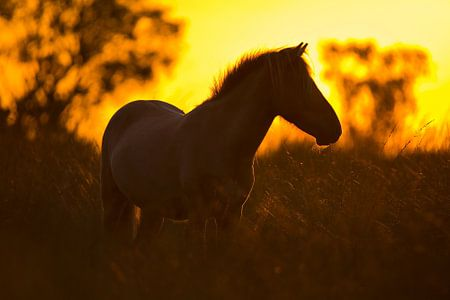 Silhouet paard tijdens zonsondergang