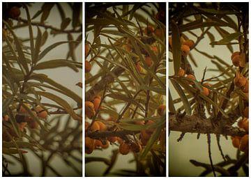 lauwersmeer triptychon 10 von anne droogsma