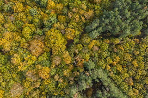 Een Nederlands bos in herfstkleuren van bovenaf gezien