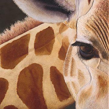Giraffe. (Giraffe) von Russell Hinckley