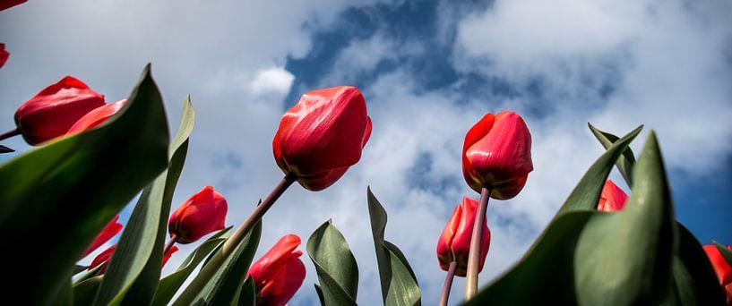 tulpenveld tegen wolkenlucht 02 van Arjen Schippers