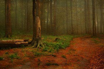 Herbstwaldweg von Heike Hultsch