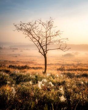Einsamer Baum von Jeroen Luyckx
