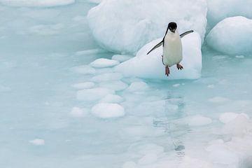 Springen Adelie Pinguin Antarktis von Eefke Smets