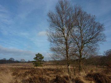Wandeling Hoogbuurloo van Ad Steenbergen