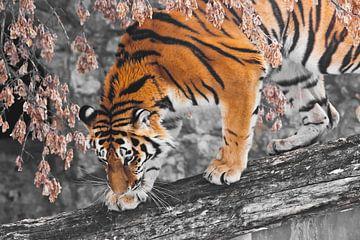 Tiger auf einem umgestürzten Baum vor der Kulisse von herbstlich verwelkten Pflanzen und Felsen, der von Michael Semenov