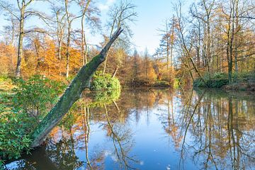 Landschaft von Wald in Holland mit Teich in Herbstsaison von Ben Schonewille