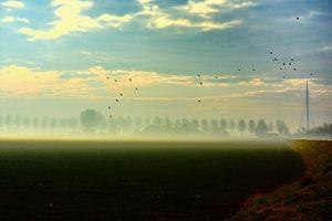 Calatravabrug met mist in de ochtendzon van