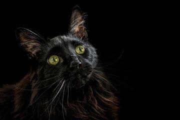 Schwarze Schönheit von Claudia Moeckel