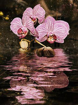 Wasserorchidee von Christine Nöhmeier