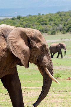 Elephanttrail... van Jack Koning